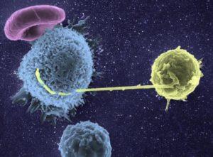 linfocito_VIH